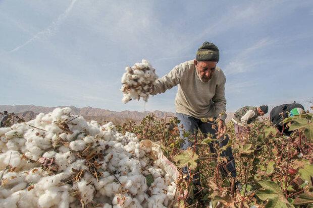 دلالان» پنبه کشاورزان را میزنند؛ ضرورت تجدیدنظر در سیاستهای حمایتی -  خبرگزاری بازار - سایت خبری بازار