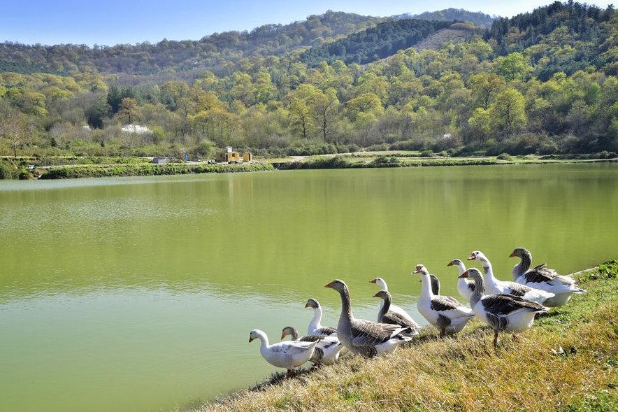 گردشگری آبی در سدهای مازندران توسعه می یابد