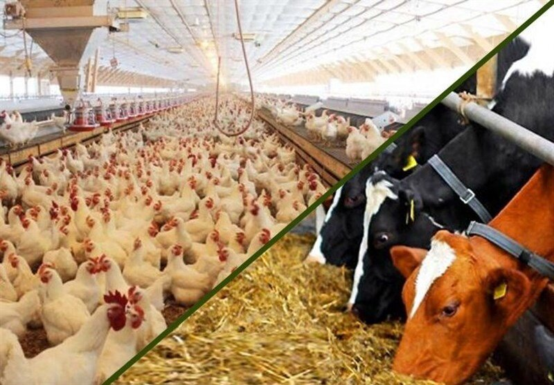 قیمت انواع نهاده های دامی و محصولات کشاورزی در ۲۶ اسفند ۱۳۹۹