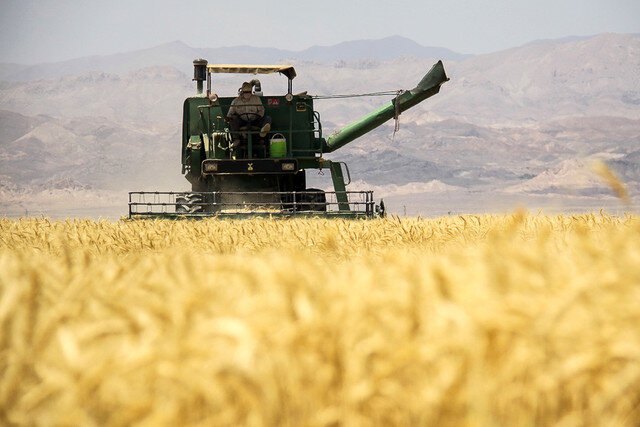 برداشت گندم در استان بوشهر سرعت میگیرد/ افزایش تعداد کمباینها