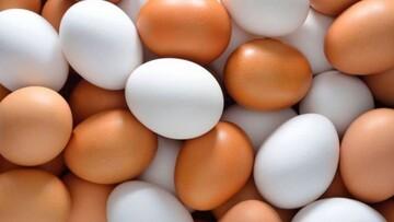 ۳هزار تومان ضرر در هر کیلوگرم تخم مرغ| ارز دولتی ذرت و سویا را حذف کنید