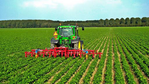 ۱۹ هزار هکتار از اراضی کشاورزی البرز به کشت محصولات گندم، جو و کلزا اختصاص یافته است