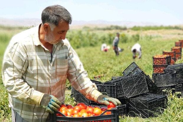 کشاورزان خسارت دیده از خشکسالی کمک مالی دریافت می کنند