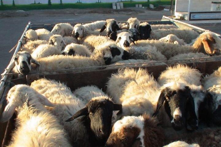 قاچاق علت افزایش قیمت گوشت قرمز نیست