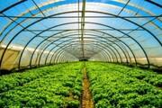 همدان از استانهای پیشتاز کشور در زمینه احداث شهرکهای گلخانهای است