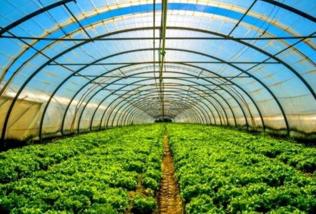 گلخانههای کوچک مقیاس در شهرستان دشتی گسترش مییابد