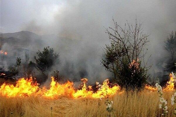 آتش سوزی در جنگل ها و مراتع زنجان ۵۰ درصد کاهش دارد