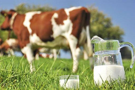 ۱۲۸ هزار تن به ظرفیت تولید شیر قزوین اضافه میشود
