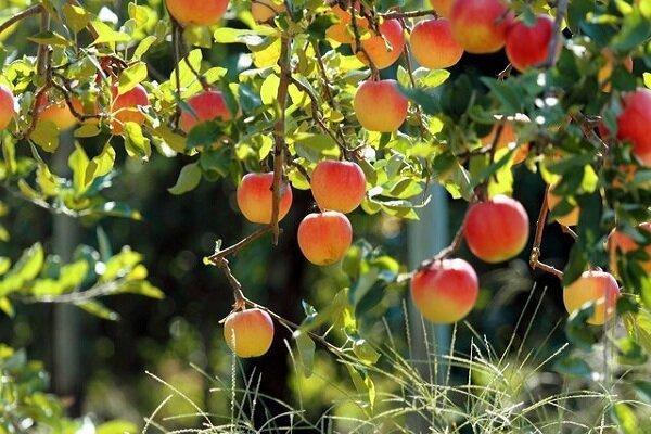 واردات انواع میوه به صورت موقت آزاد شد