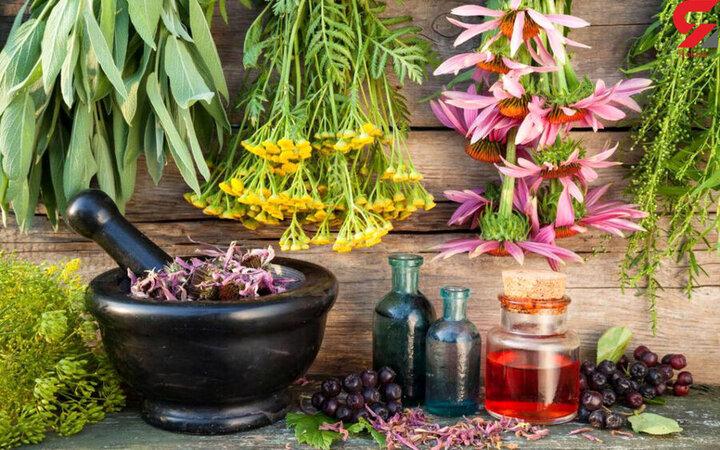 سیستان و بلوچستان بی بهره از صنعت گیاهان دارویی؛ گنجی پنهان در دل کویر