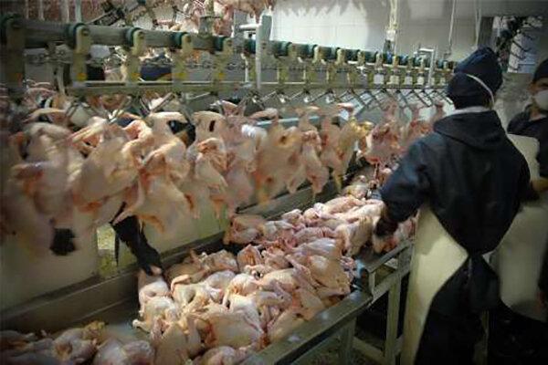 کاهش جوجه ریزی تیرماه افزایش قیمت مرغ در شهریور را به دنبال دارد