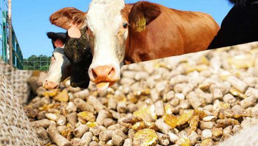 باید از ظرفیت بخش خصوصی در فرایند توزیع و تهیه مرغ استفاده شود