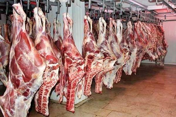 در تامین گوشت قرمز کمبودی نداریم| خرید نهاده های دامی از بازار آزاد علت گرانی