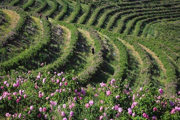 ایجاد ۲۰ هزار فرصت شغلی در کشور/ ۱۸۳ هزار تن محصولات زراعی در اراضی شیبدار تولید شد