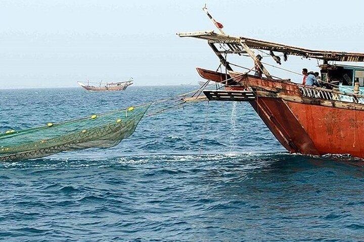 کاهش ۲ درصدی صید میگو در آبهای استان بوشهر