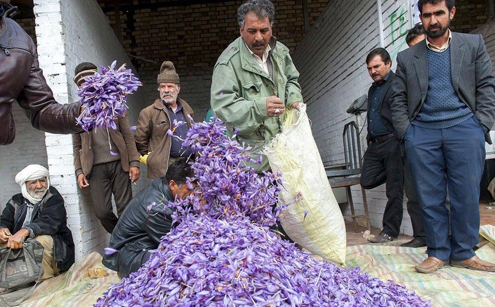 دلالان در کمین دسترنج زعفرانکاران؛ شورای ملی زعفران توان نظارت ندارد
