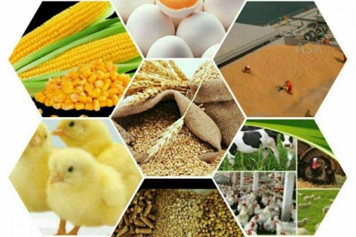 توضیح معاون وزیر جهاد کشاورزی درباره توزیع نهادههای دامی