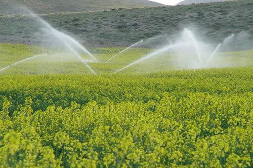 کشت و صنعت پارس برند تولید بذر در کشور/ ارزش کشت و صنعت ۴۷۰۰ میلیارد تومان است