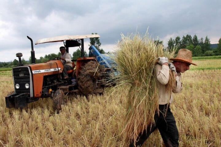 عدم تامین به موقع بذر، کشور را دچار مشکل می کند