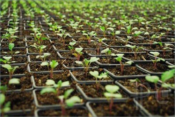 کشاورزی ارگانیک گیاهان دارویی در همدان مغفول مانده است