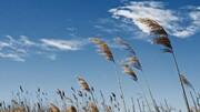پیشبینی وزش باد با سرعت ۱۰۰ کیلومتر بر ساعت در کرمانشاه
