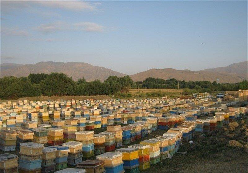فعالیت ۲۵۰۰ بهره بردار زنبور عسل در همدان