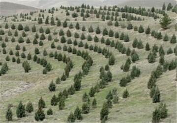 چندین طرح آبخیزداری در آذربایجان شرقی افتتاح می شود