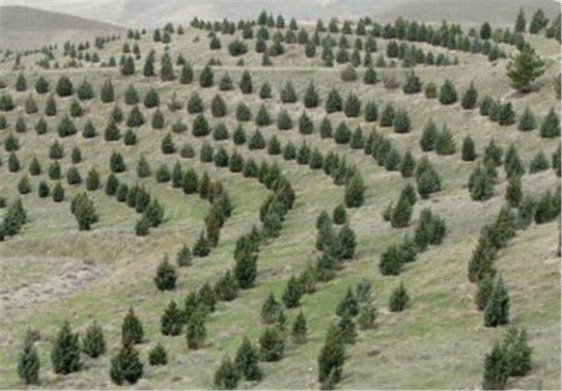 ۸۲ کیلومتر کمربند حفاظتی در عرصه های طبیعی استان همدان ایجاد می شود
