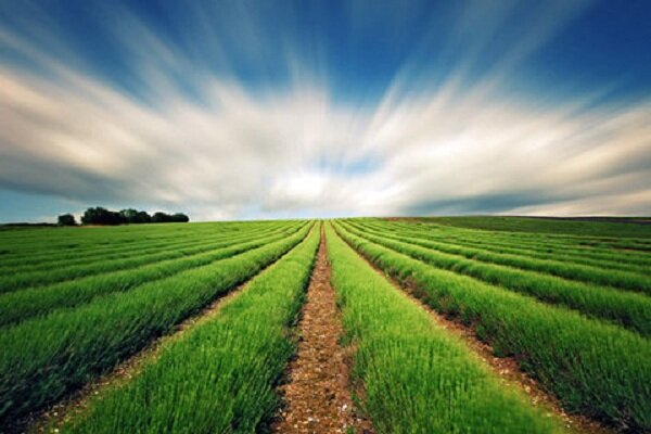 سیل خسارت گستردهای به بخش کشاورزی دشتستان وارد کرد