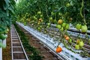 آذربایجانشرقی در توسعه گلخانهها رتبه نخست کشوری را دارد