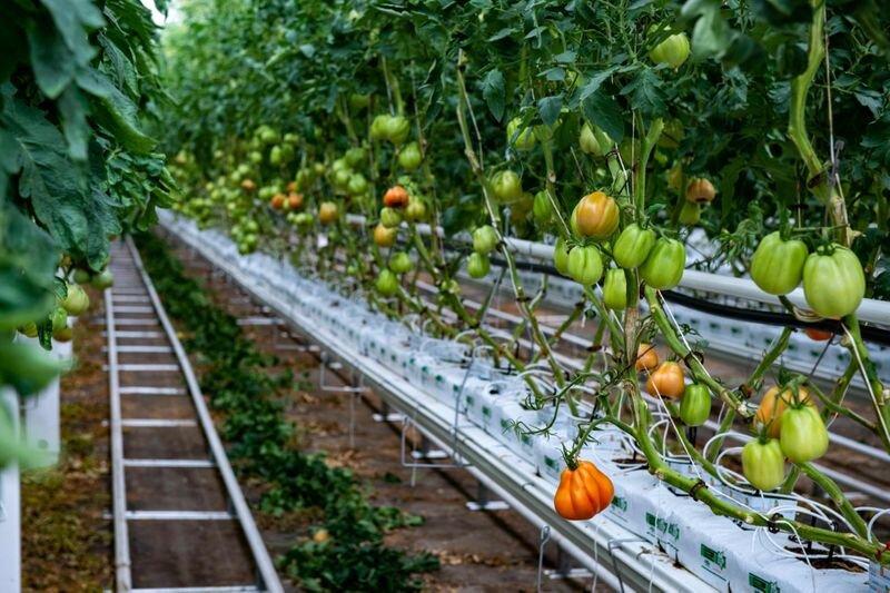 مجتمع بزرگ گلخانه ای در مازندران احداث می شود