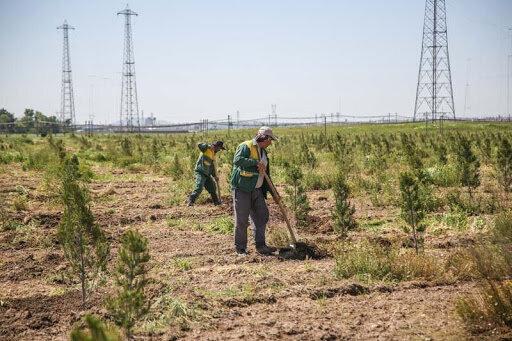 اجرای طرح ۲۰۰ هکتار جنگل کاری در حوزه آبخیزداری منطقه گردشگری دره گردو اراک