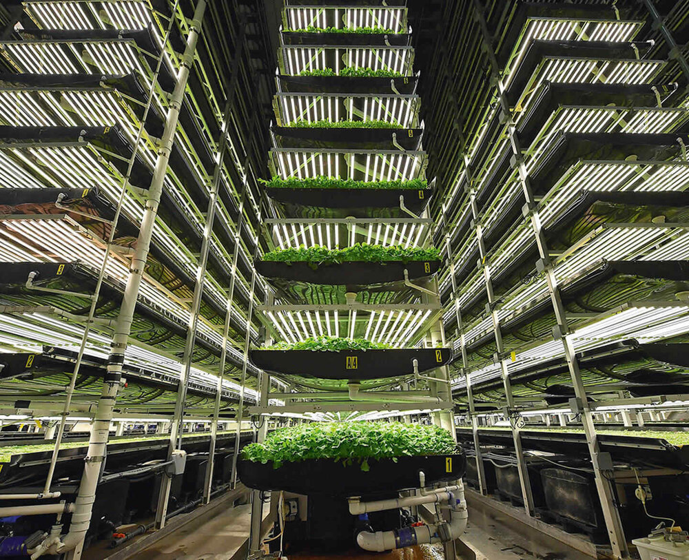 کشاورزی عمودی، راه حل دنیا برای گذر از چالش کمبود غذا