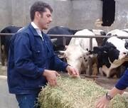 تولید ۳۶ هزار تُن گوشت سفید و قرمز در استان مرکزی