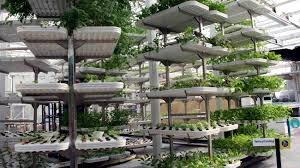 کشاورزی عمودی؛ افزایش تولیدات ارگانیک بدون آسیب زیستی