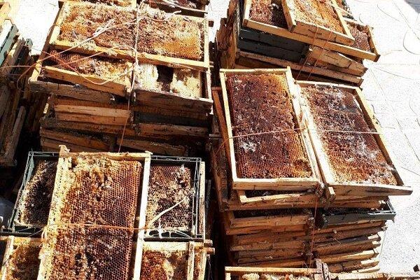 خسارت گرما به زنبورستانهای شهرستان بشرویه