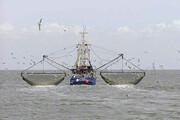 معاون وزیر جهاد کشاورزی: مجوز صید به کشتیهای خارجی نمیدهیم