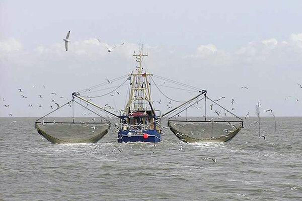 ترالها امنیت شغلی صیادان بلوچ را ربودند؛ خداحافظی ماهیها با سواحل مکران