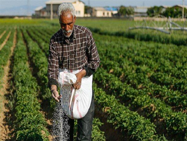 نرخ بالای کودهای شیمایی محصولی گران بار میآورد؛ خشکیدن ریشه ارزانی