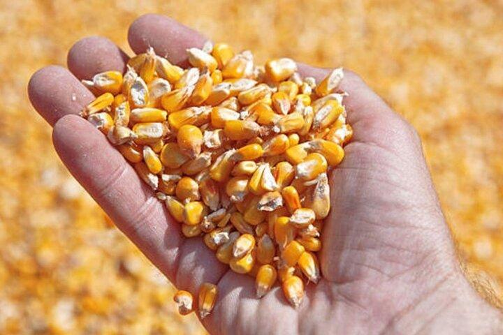قیمت انواع نهاده های دامی و محصولات کشاورزی در ۱۵ فروردین ۱۴۰۰