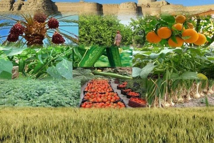 فروش بیش از یک هزارمیلیارد تومانی محصولات زراعی خراسان شمالی