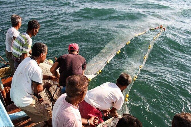 صید بیش از ۲۰ هزار تن کیلکا در سال ۹۹