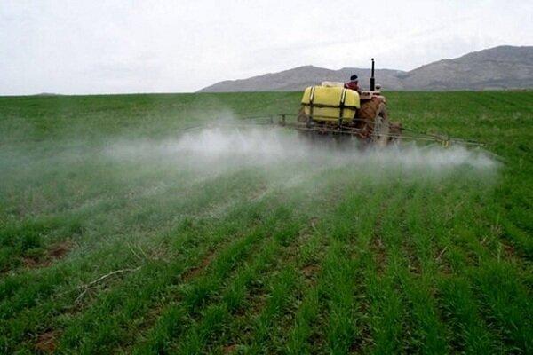 کشاورزی قراردادی با کشت کلزا و چغندر در کهگیلویه و بویراحمد آغاز می شود