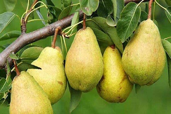 تداوم سایه سنگین گرانی بر بازار میوه همدان/ قیمتهایی که با جیب مردم همخوانی ندارد