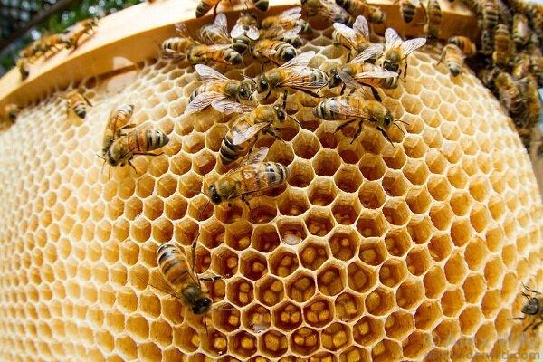 تولید ۲ هزار تن عسل در شهرستان خداآفرین