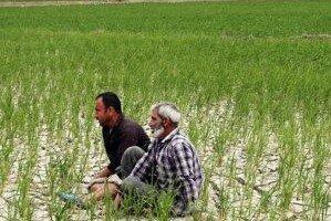 پاییز پراضطراب کشاورزان/ زمینه تبدیل اراضی کشاورزی به ویلا مهیا شد