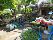 یک سوم گلخانه های تهران در پیشوا قرار دارد/ افزایش ۲ میلیون دلاری صادرات صیفیجات
