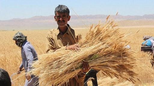 قیمت هر کیلو گندم باید ۴۸۰۰ تومان باشد