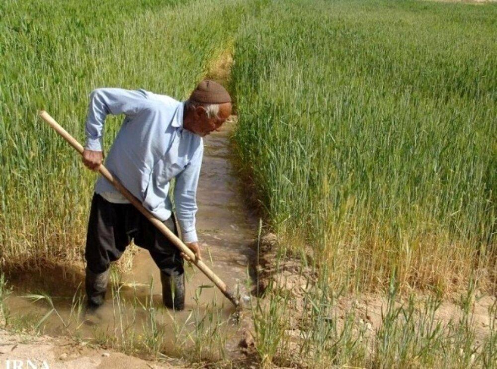 ۱۹۹ هزار هکتار از اراضی کشاورزی قزوین به زیر کشت محصولات پائیزه میرود