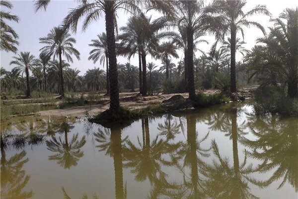 استفاده برخی روستاهای آبادان از آب شرب برای کشاورزی